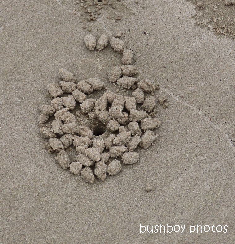 sand crab_balls_art_named_evans head_feb 2020