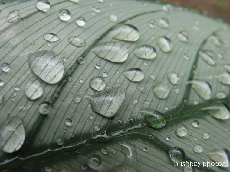 water drops_leaf_named_home_jackadgery_feb 2020