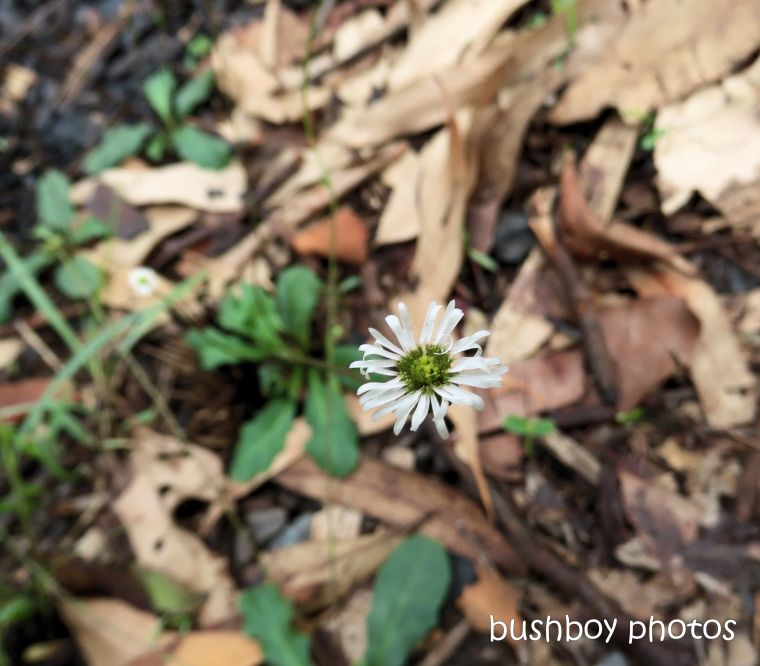 white_flower_named_home_jackadgery_feb 2020