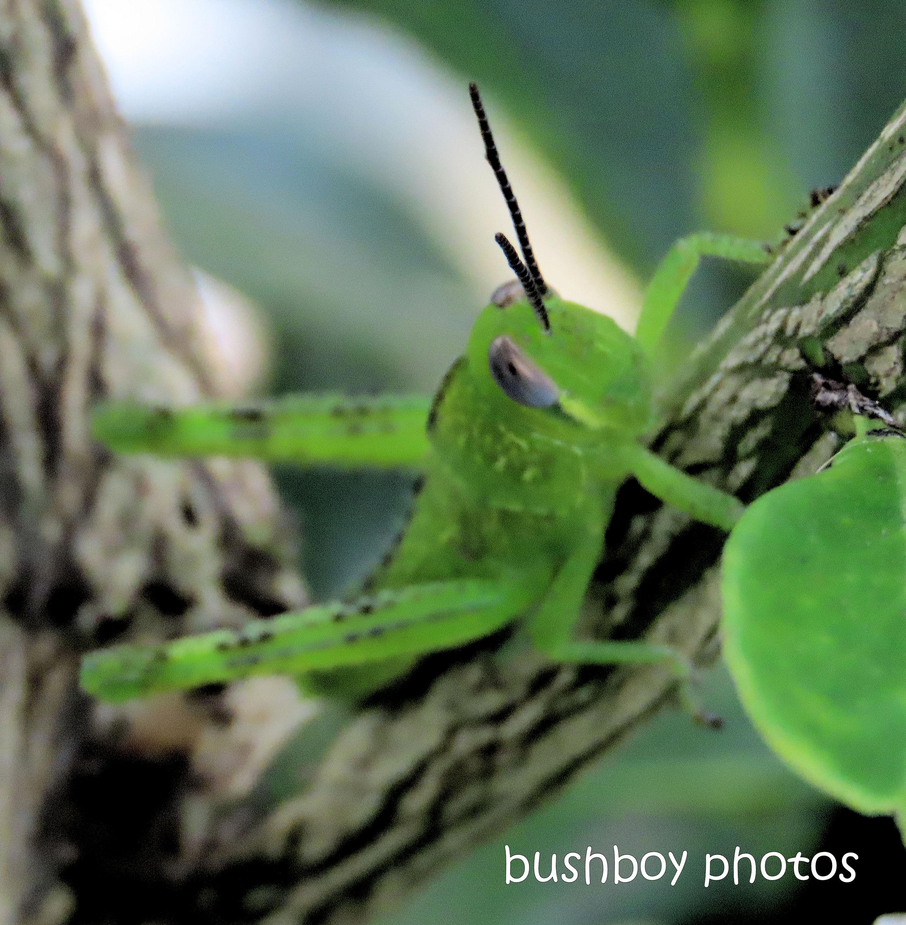 20200413_blog challenge_macro_monday_grasshopper