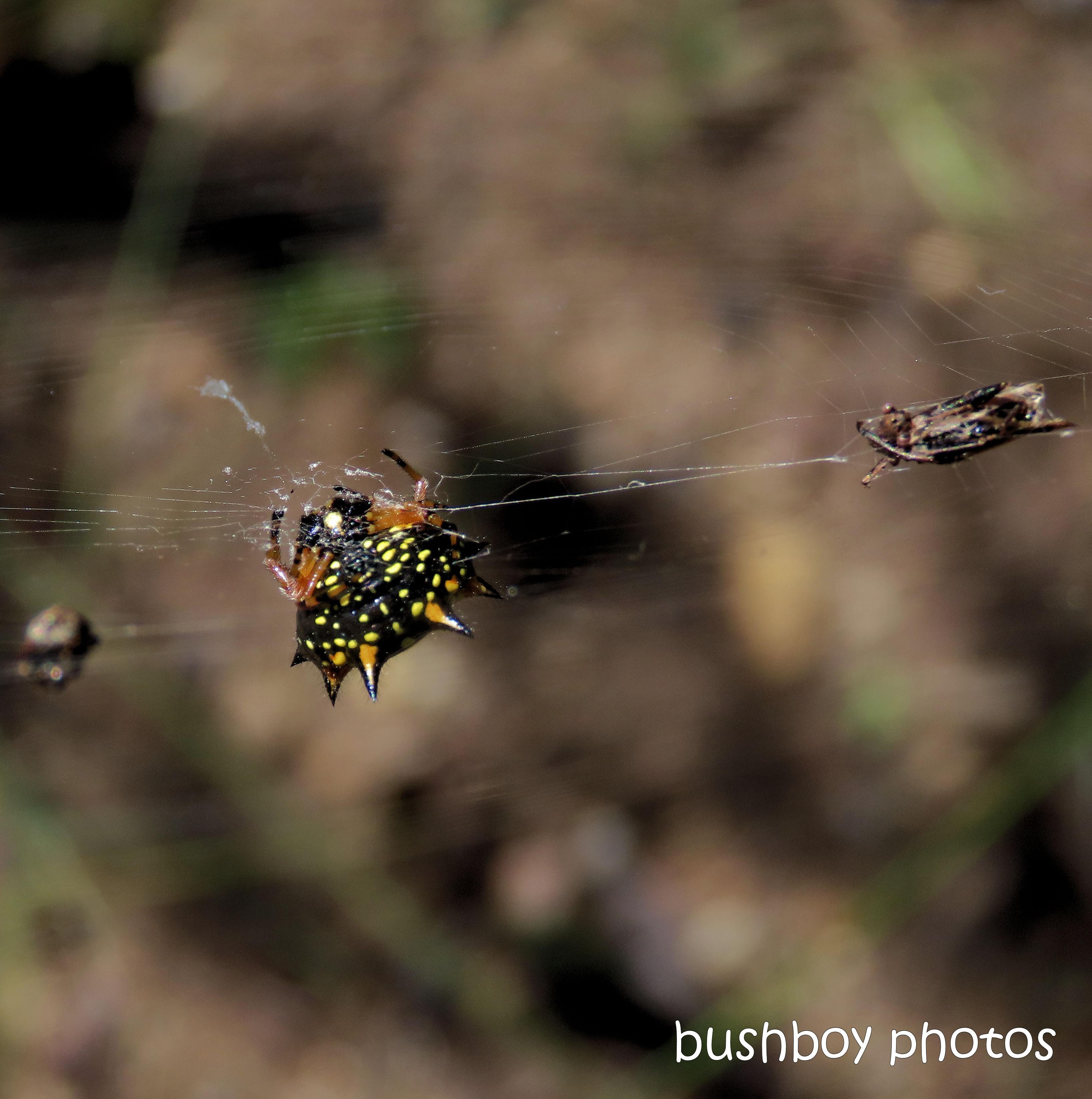 20200420_blog challenge_macro_monday_spider
