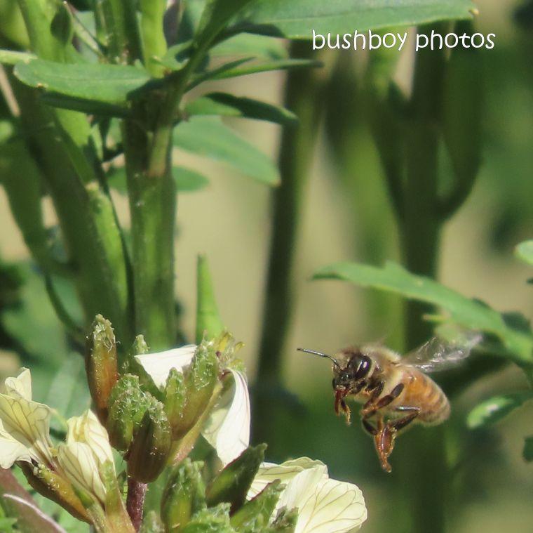20200430_blog challenge_top_bee_flower