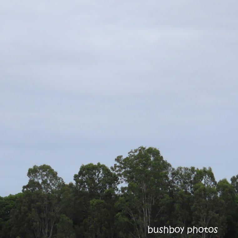 2020405_blog challenge_top_trees