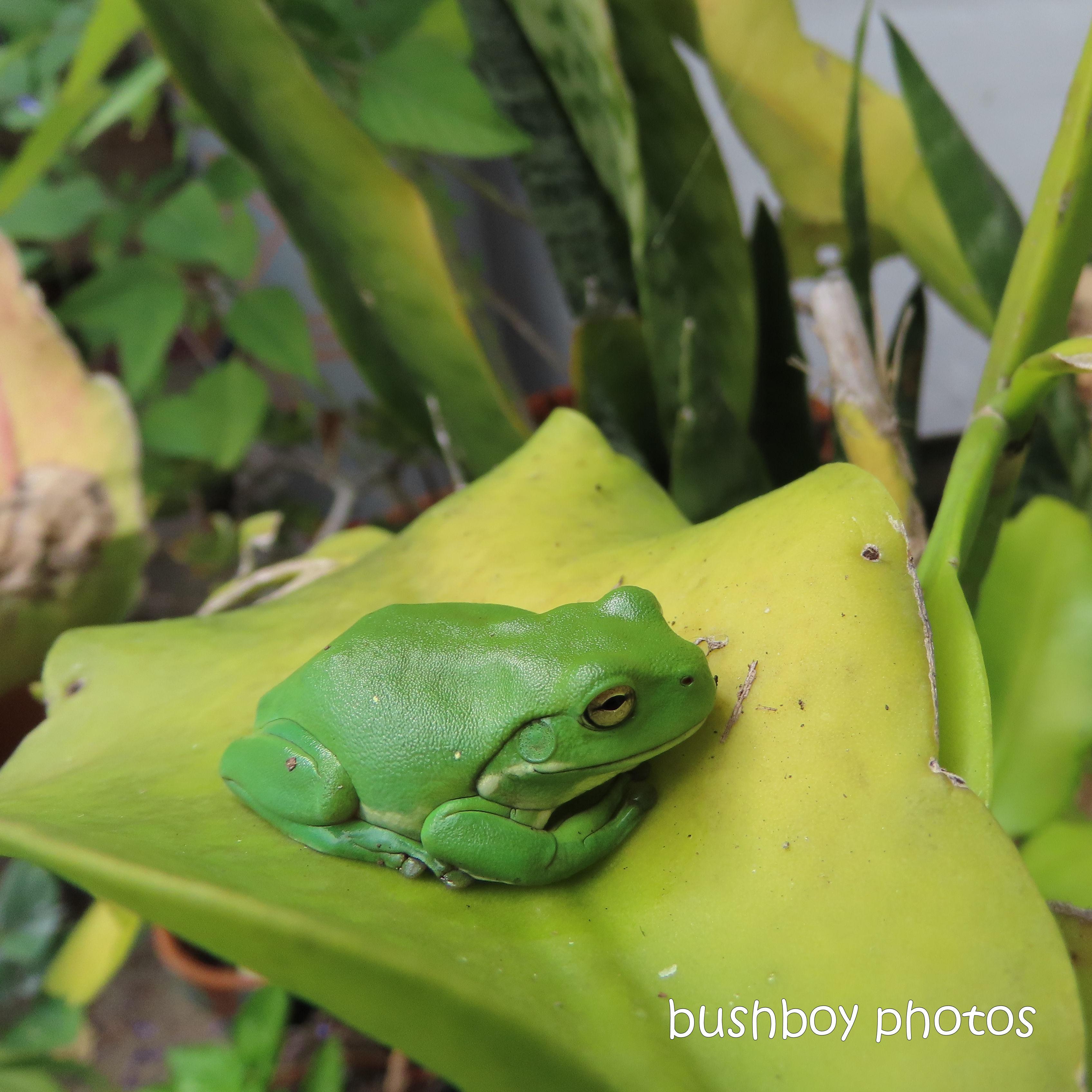 2020409_blog challenge_top_green tree frog