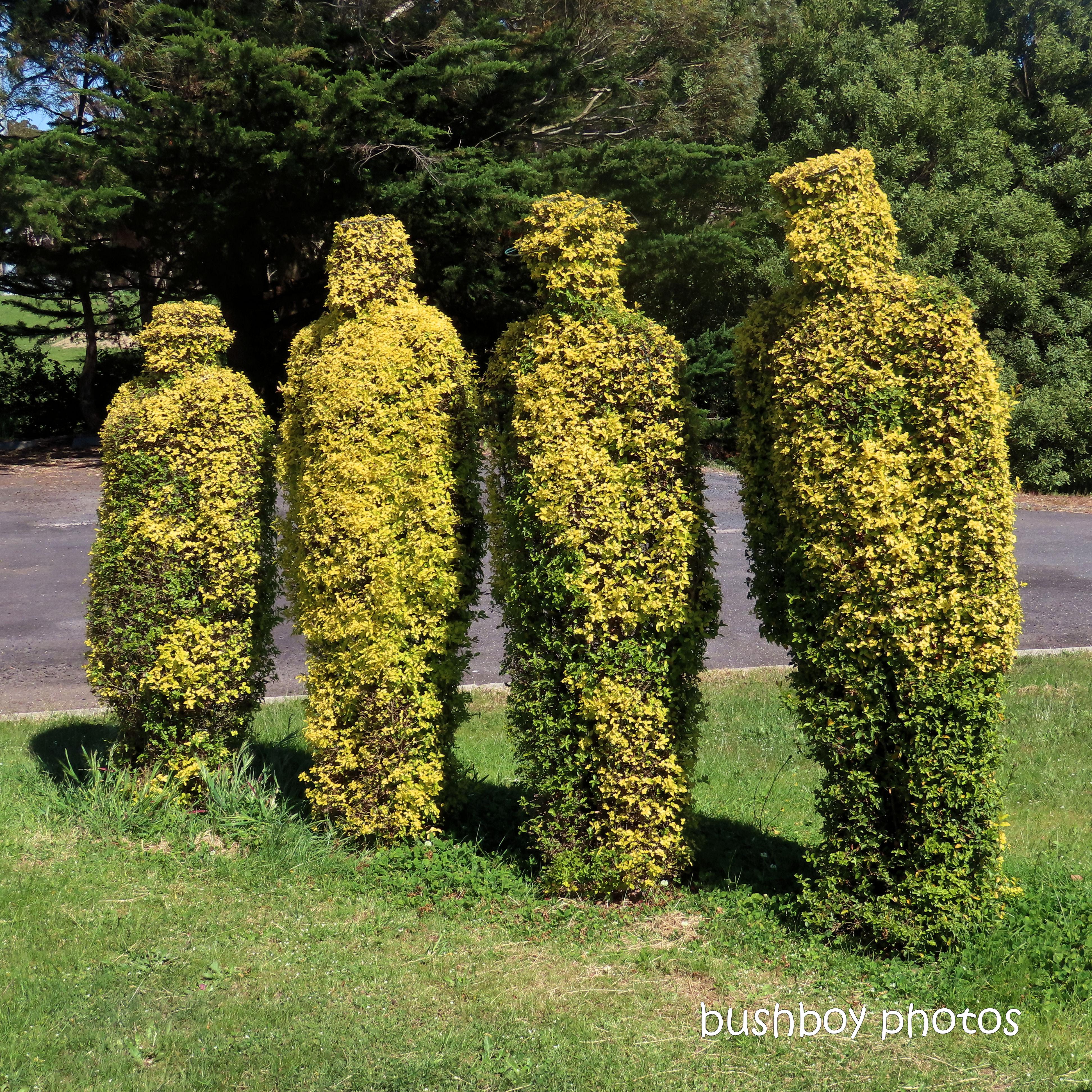 2020425_blog challenge_top_topiary_tasmania