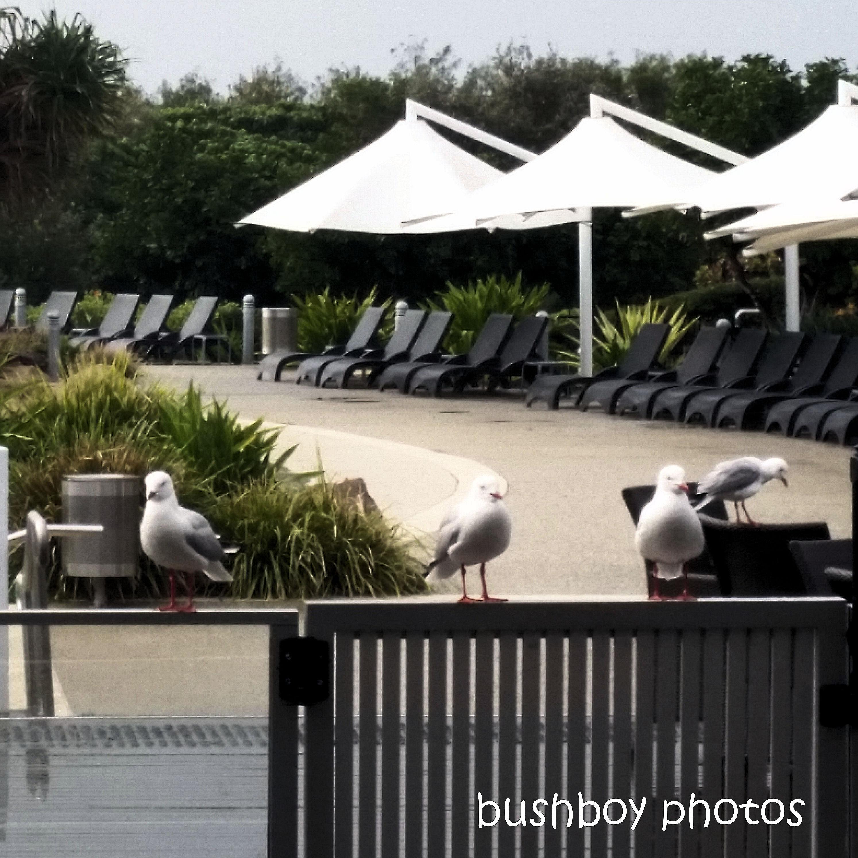 2020428_blog challenge_top_gulls_railing_lunch1
