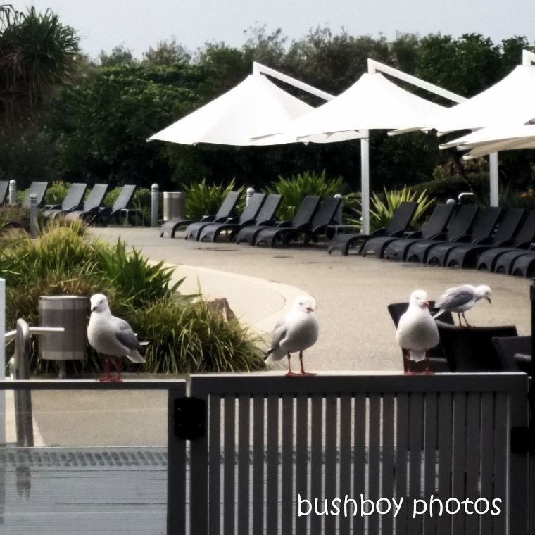 2020428_blog challenge_top_gulls_railing_lunch1