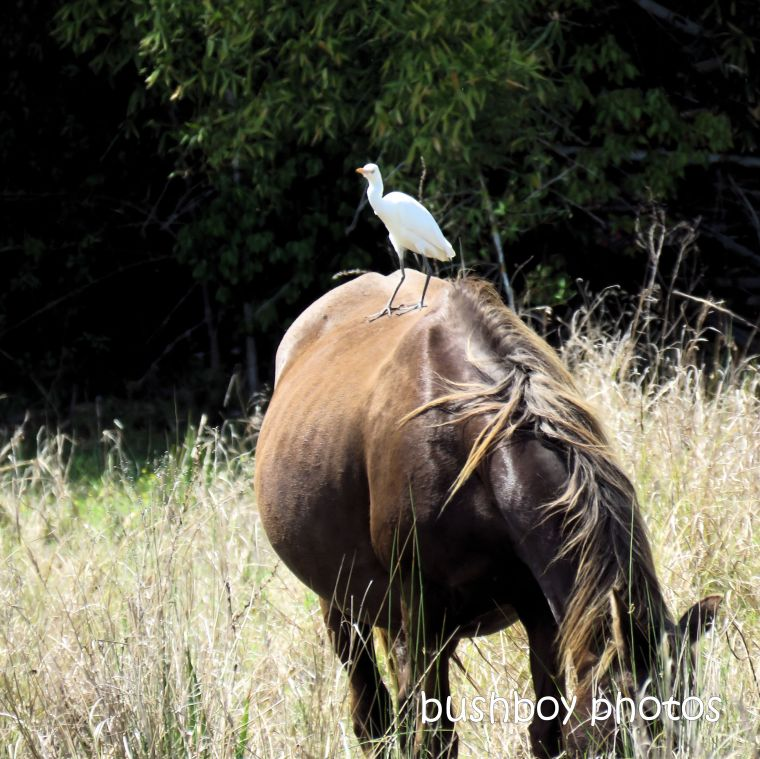 2020429_blog challenge_top_cattle egret_horse
