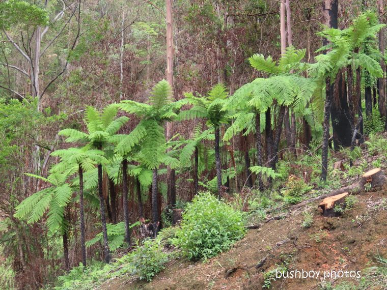 tree ferns_gibraltar range_named_march 2020