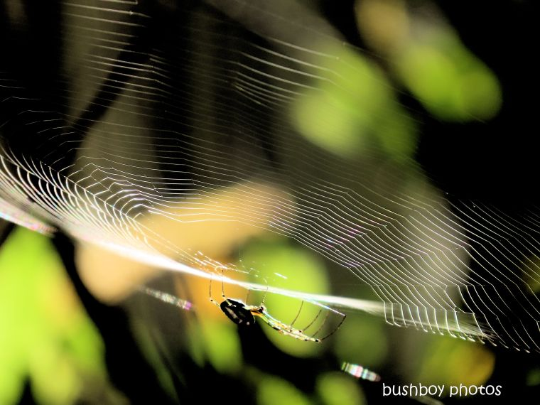 spider_web_morning_named_caniaba_april 2020